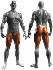 leg_press_muscles